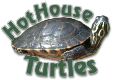 hothouseturtles